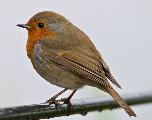 Robin on my Rod  <img src=/Images/Icons/Smileys/1.gif border=0 align=absmiddle>
