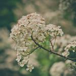 June blooms...