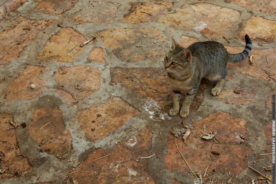 20111012_CAT_035
