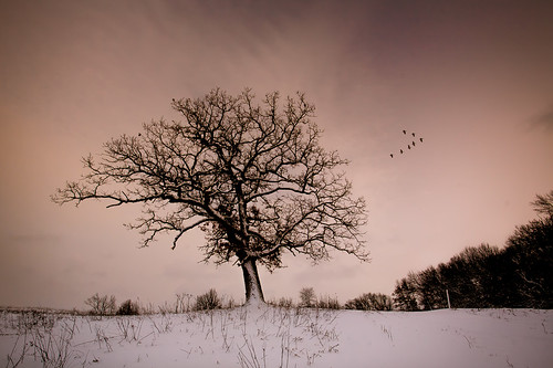 winter sunset sky usa snow tree nature wisconsin landscape photography evening geese photo midwest image dusk belleville january picture photograph northamerica canonef1740mmf4lusm canoneos5d danecounty 2013 brooklynwildlifearea lorenzemlicka