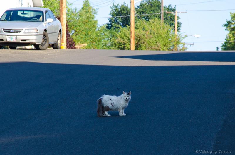 Klamath Falls cat