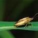 Best of Show - 1st Place - Published Images - Beto Gutierrez - Rice Stink Bug