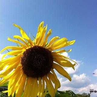 ※秋です #sky #イマソラ