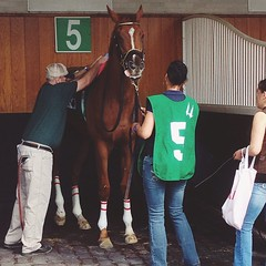 We toured the horse stables #Churchilldowns #kentuckyderby #kentucky #horses #stable #theraces