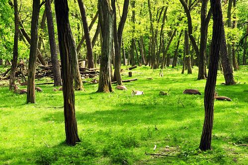 Mai-Spaziergang im Käfertaler Wald Mannheim