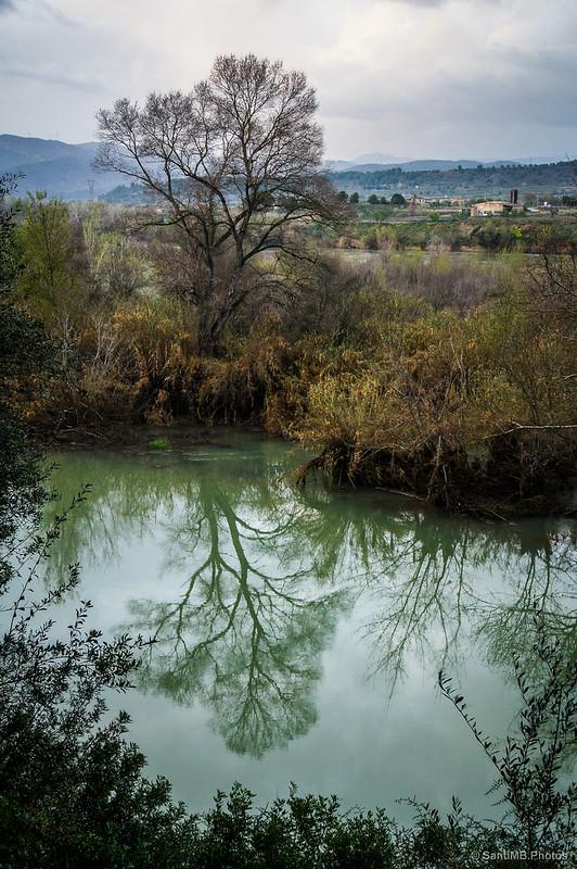 El árbol que se miraba en el río