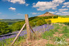 Roseberry and the Bluebells