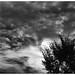 LEICA M MONOCHROM(Typ246)  APO-SUMMICRON-M 50mm/f2 ASPH. by Camera of Bob