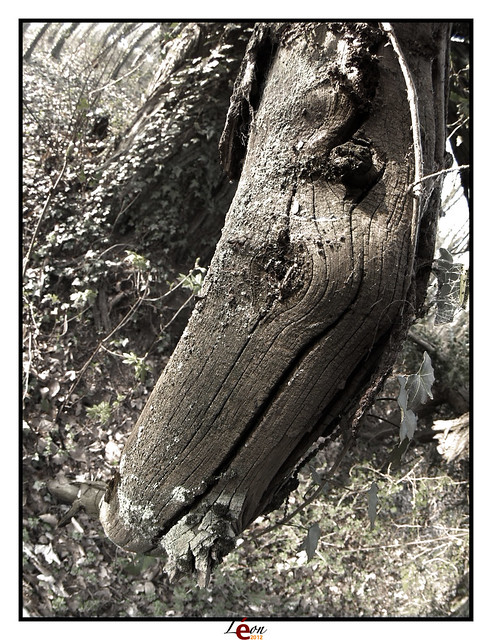 Le peuple de la forêt - Page 3 6906960200_e76d3dcf67_z