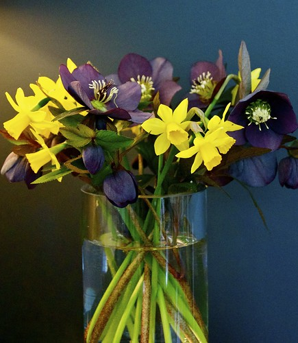 Jonquils and Lenten Roses (Hellebores) for our easter table from our garden by Snowlet