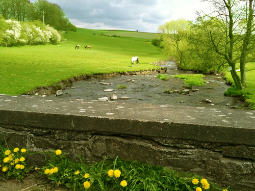 Green meadow with stream