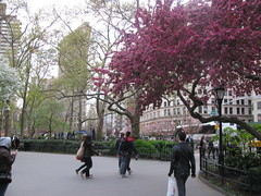 Madison Square April by edenpictures, on Flickr