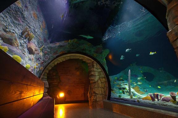 kansas city aquarium sea life aquarium at crown center