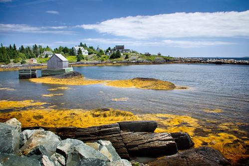 blue seaweed yellow seaside rocks novascotia shoreline atlantic