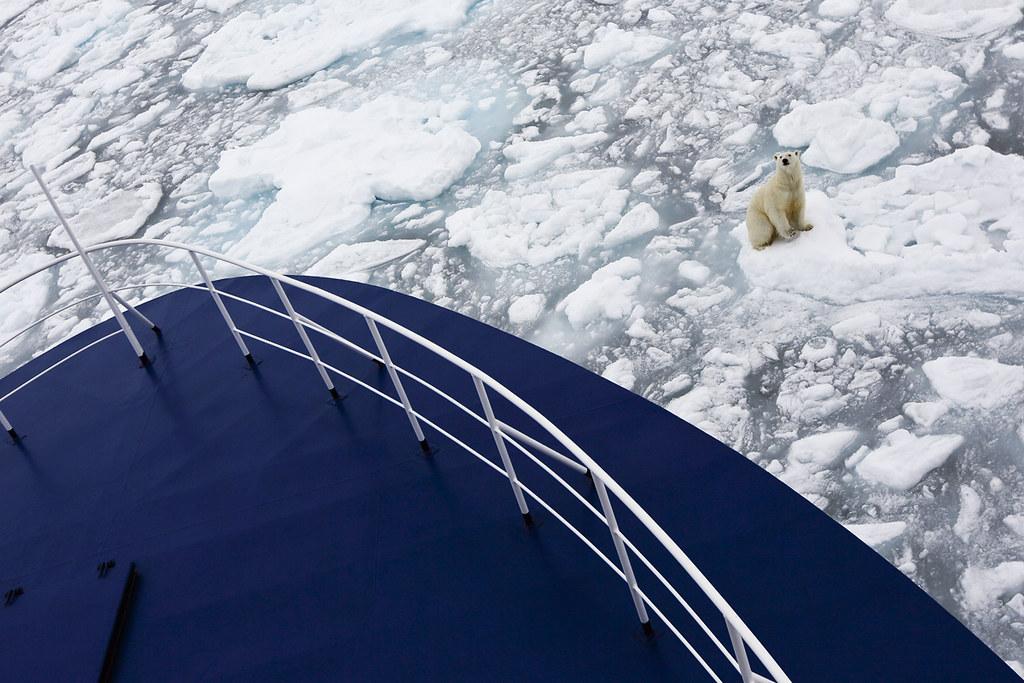 polar bear in front of ocean nova