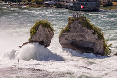 Rhine Falls, the Rock #1