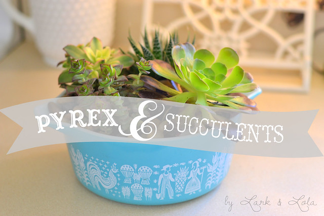 Pyrex & Succulents