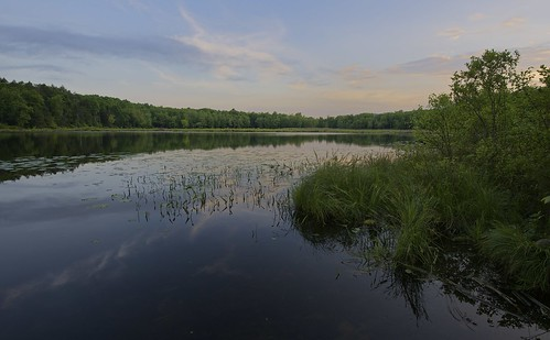 trees usa ny reflection grass night clouds sunrise pond clear waterlillies esopus ulstercounty scenichudson shaupeneakridge louisapond