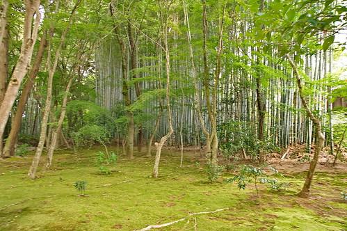 【写真】2013 青葉 : 地蔵院/2021-07-28/IMGP0964