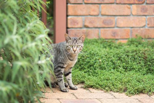 CAT 1 20130715