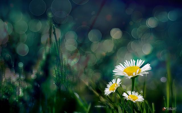 flower 0000