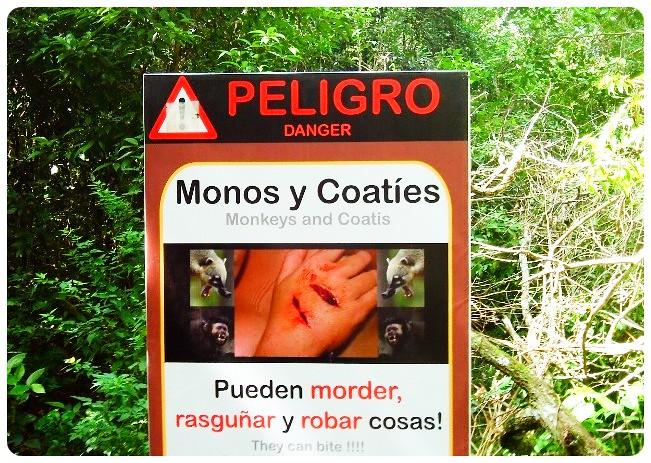 coati warning sign