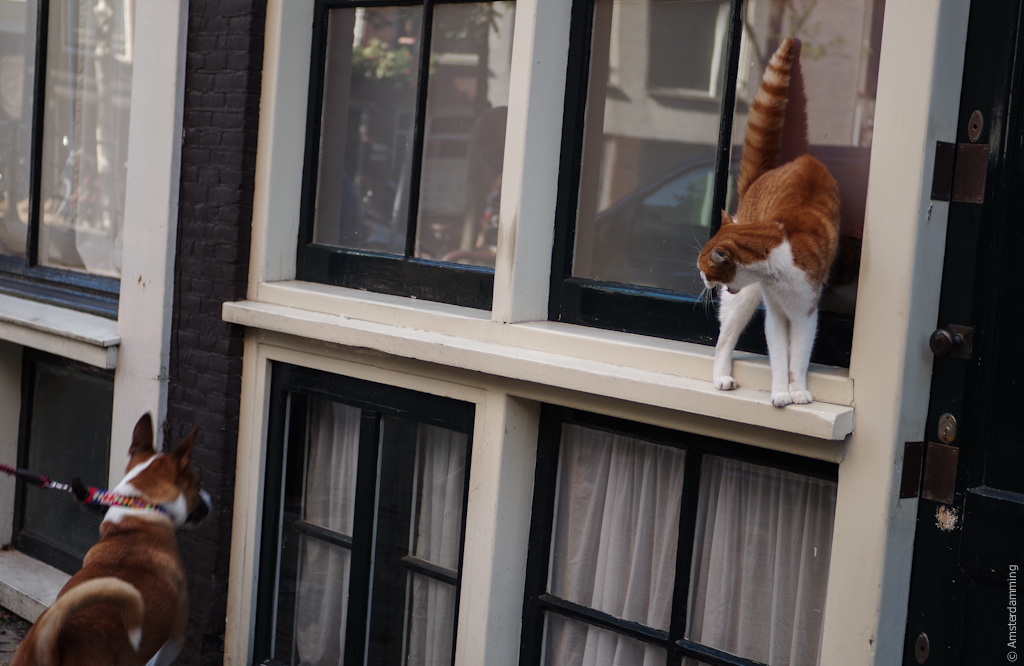 Amsterdam, Cat and Dog