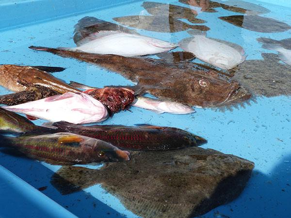 poissons plats