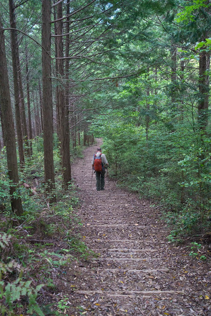 Kumano Kodo, first of many steps