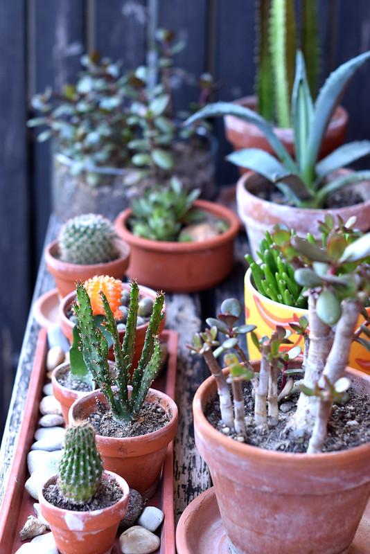 plant-gang02
