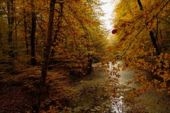 Magical autumn...