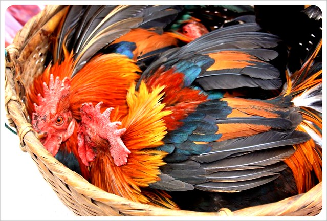 morning market roosters