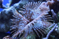 fish(0.0), fish(0.0), lionfish(0.0), scorpionfish(0.0), pomacentridae(0.0), coral reef(1.0), animal(1.0), coral(1.0), organism(1.0), marine biology(1.0), macro photography(1.0), fauna(1.0), close-up(1.0), underwater(1.0), reef(1.0), sea anemone(1.0),