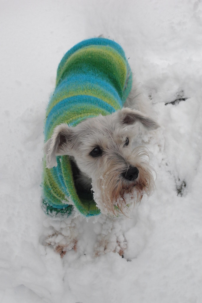 Windy is moaning in the snow...too cold