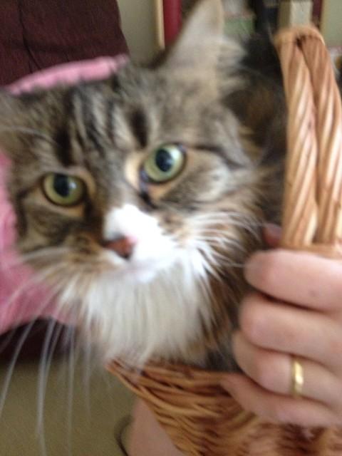 Wicker Cat Home
