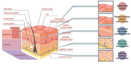 collagen skin