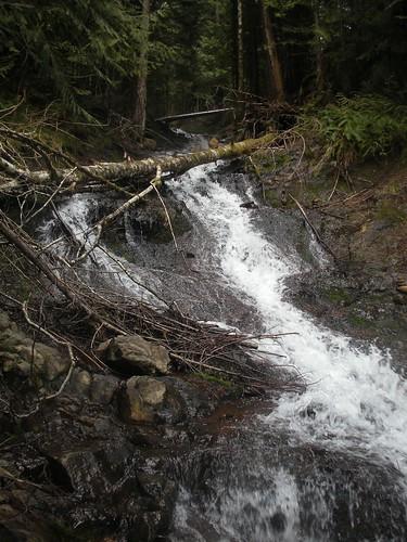 statepark usa creek washington unitedstates capitalforest mimaporter