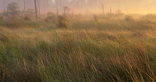 statepark light lana nature sunrise catchycolors landscape louisiana award grasses mandeville marsh win awardwinning 1stplace gramlich sttammanyparish fontainebleaustatepark fantasticnature dragondaggerphoto canoneosrebelt2i lanagramlich apr82012