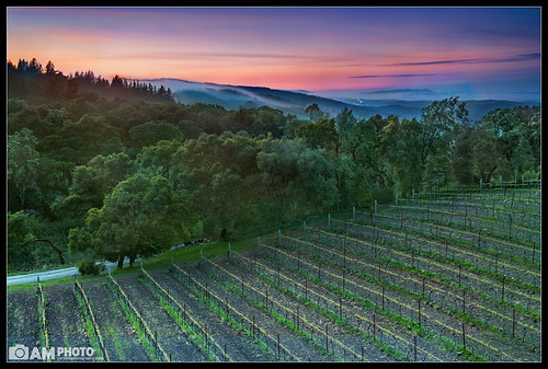 california trees sunset nature fog clouds landscape vineyard vines nikon nightscape wine wind winery rows grapes woodside fogarty grapevines landscapephotography thomasfogartywinery thomasfogarty sfphotography aaronmeyersphotography