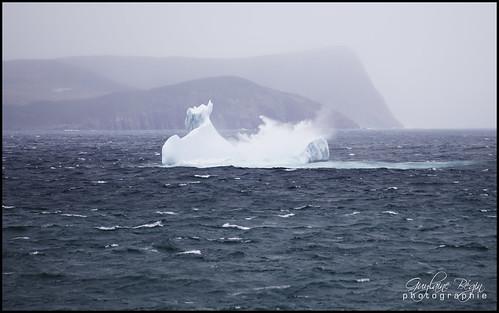 sea mer canada monochrome newfoundland landscape spring exterior stjohns atlantic glacier explore 100 iceberg 221 paysage extérieur printemps brouillard avalon 188 4000 capespear océan terreneuve 4976 océanatlantique newfoundlandlabrador terreneuveetlabrador capspear péninsuledavalon