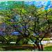The Summer Tree by Tim Noonan