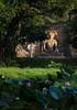 Ancient City of Polonnaruwa, seated Buddha in meditation at Gal Vihara Rock Temple (Gal Viharaya)