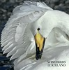 My book / Wise birds of Iceland
