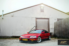 RED Spicy CRX