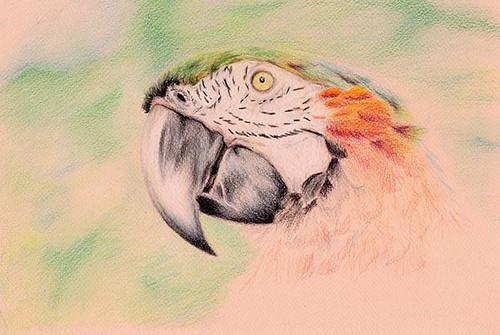 parrot12