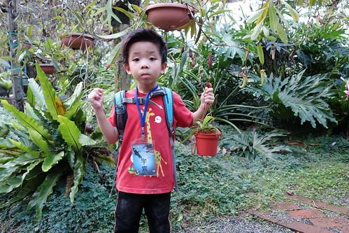 豬籠草種植DIY