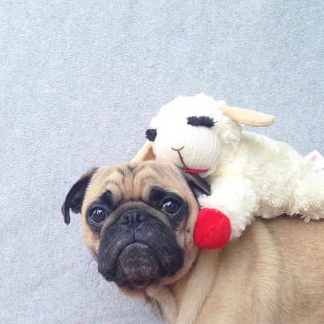 Meet-Norm-Dog-10