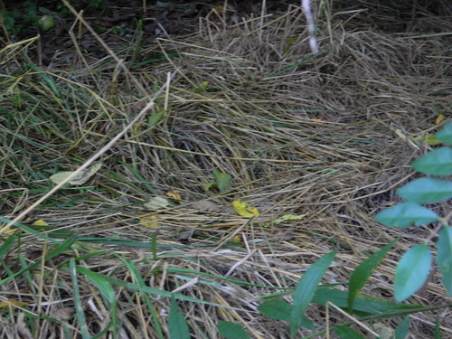 Something's Bed