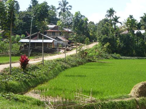 Sulawesi13-Makale-Rantepoao (51)