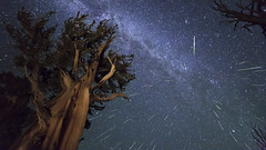 Perseid Meteors over Ancient Bristlecone Pine